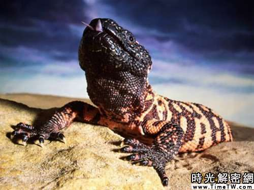 神奇動物改善人類健康:箭頭蛇毒液能降血壓(2)