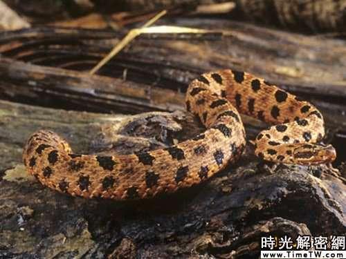 神奇動物改善人類健康:箭頭蛇毒液能降血壓(3)