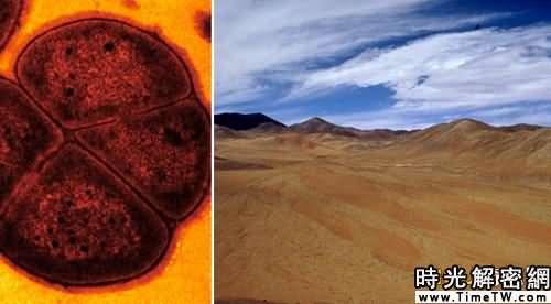極端條件下的生命:沙漠發現最強悍細菌(組圖)