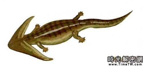 十三大怪異遠古動物:雕齒獸形似甲殼蟲汽車(2)