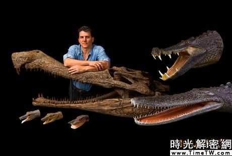 塞利諾與鱷魚化石