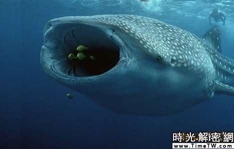 中最奇特的十种鲨鱼