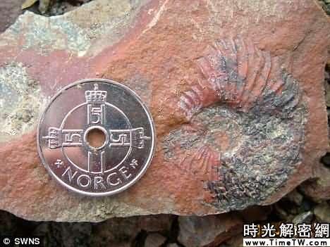 證據:這個在挪威斯瓦爾巴特群島發現的侏羅紀菊石,顯示了當時的氣溫突然降低。科學家認為,這一時期的氣溫下降可能是導致恐龍走向滅絕的一個主要因素。