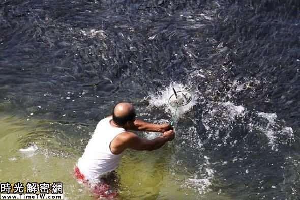 興奮的當地漁民們衝向水中,抓住這難得的機會捕魚