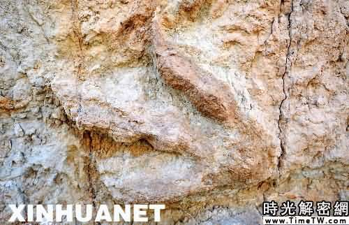 我國發現最大規模侏羅紀恐龍足跡化石群[組圖]