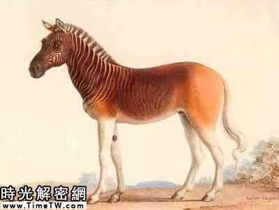 13[多图]揭秘世界十大已灭绝的动物