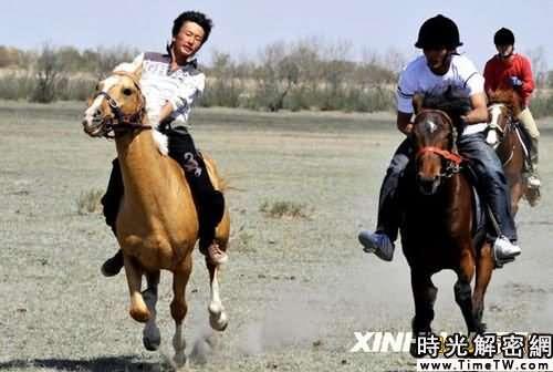組圖:「汗血寶馬」亮相新疆