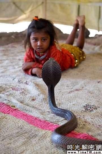 印度部落兒童2歲就用眼鏡蛇「練膽兒」(組圖)