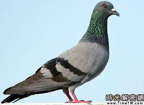 新研究稱鳥類並非恐龍進化而來(組圖)