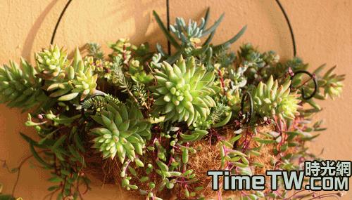 多肉植物可以組合養植嗎 多肉植物組合盆栽養護辦法