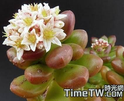 多肉植物花卉播種繁殖的要點介紹