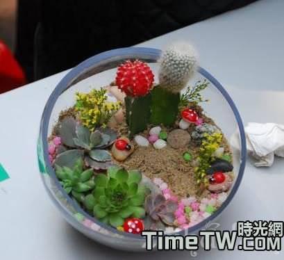 花友分享:組合多肉植物拼盤注意事項