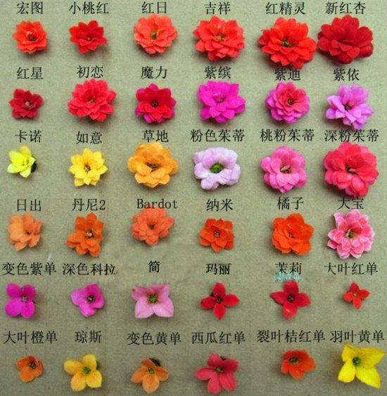 長壽花 Narcissus jonquilla L.