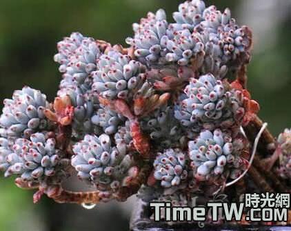 多肉植物過冬如何控制必要的濕度