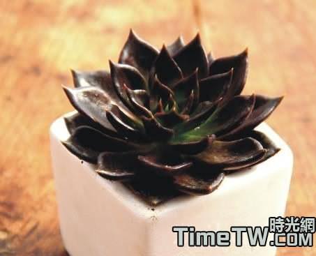 黑王子多肉植物扦插繁殖的方法介紹