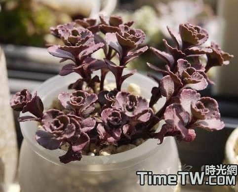 多肉植物八招變美麗的方法介紹