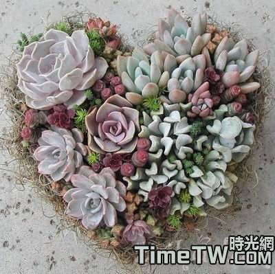 春季多漿花卉(多肉植物)養護要點