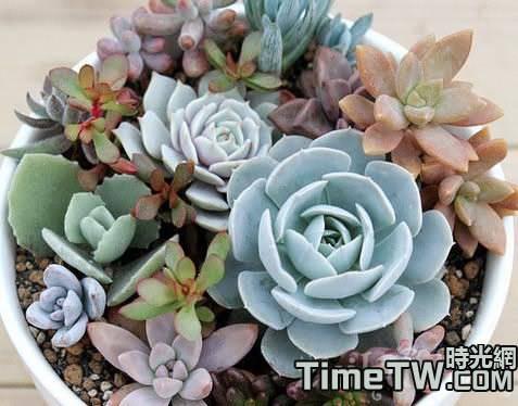 盆栽多肉植物的三種類型具體養護方法