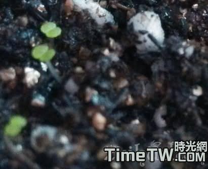 多肉植物播種過程中容易出現的幾個問題