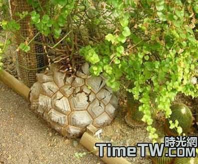南非龜甲龍夏季與冬季的養護管理介紹
