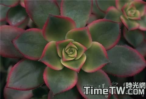 寶石花的繁殖方式、方法有哪些  寶石花的藥用價值有哪些