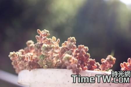 如何養好姬星美人,姬星美人何時開花,它的生長習性是什麼?