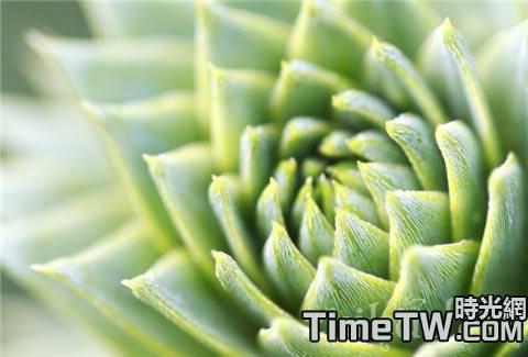 介紹多肉植物寶石花的繁殖方法,以及具體做法