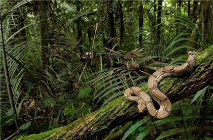 叢林穿越注意蛇