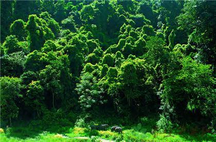 西雙版納叢林穿越