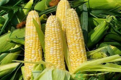 玉米怎麼吃最營養