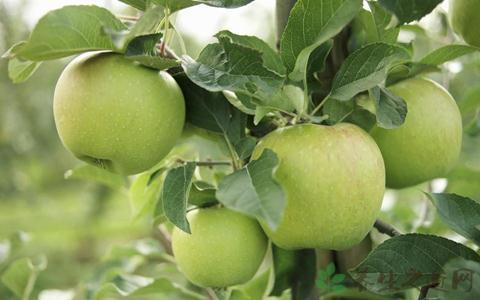 常吃蘋果的七大好處