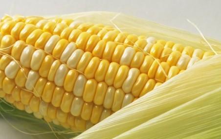 多吃穀類食物