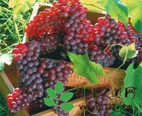 春季養生水果,春天吃什麼水果養生