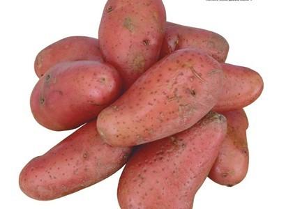 吃紅薯的好處多多