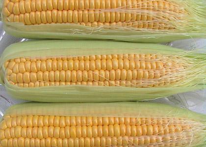 玉米須的藥用價值