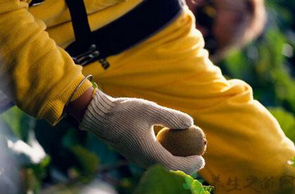 10種食物健腎補腎——獼猴桃
