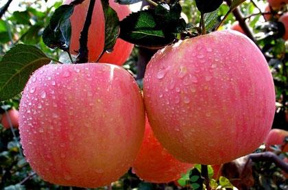 吃蘋果的10大功效