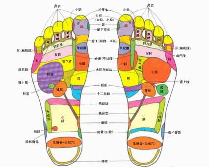 腳底穴位圖