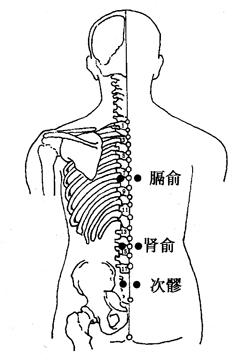 圖3-8-1膈俞、腎俞、次髎