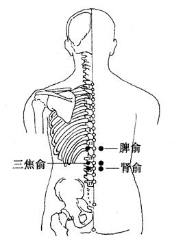 圖4-5-3脾俞、三焦俞、腎俞
