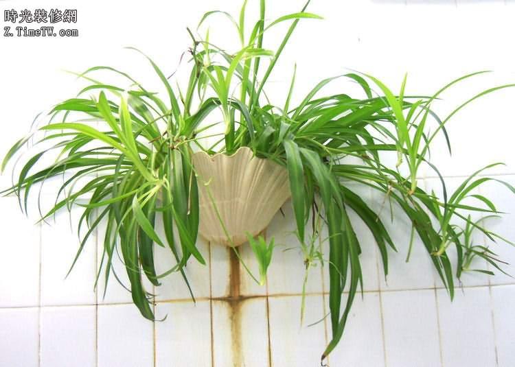 淨化空氣的植物推薦 裝修後需要擺放的植物