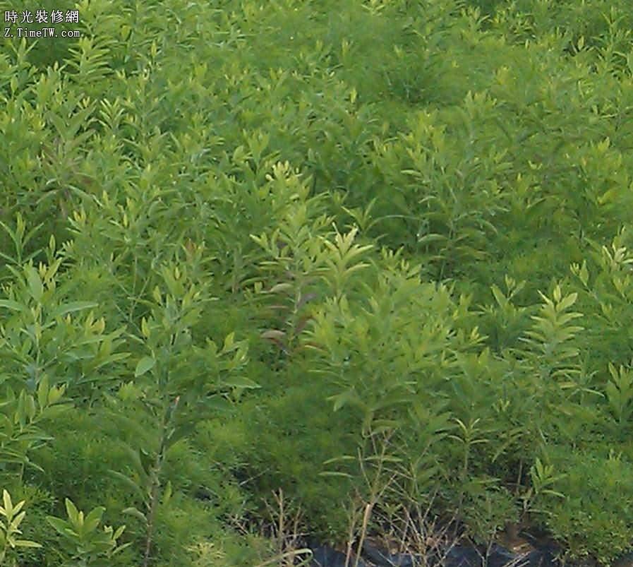 簡要概述檀香木的種類有哪些