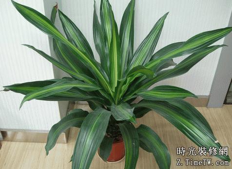 室內吸毒植物有哪些