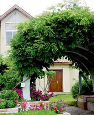 別墅庭院種植植物的風水知識以及注意事項