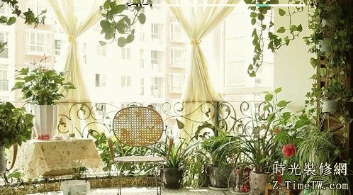 陽颱風水植物介紹   陽颱風水植物排行榜