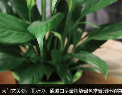 辦公室植物推薦  辦公室植物要選對