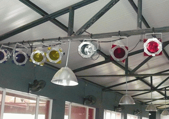 簡燈保養清潔小貼士 簡燈保養技巧